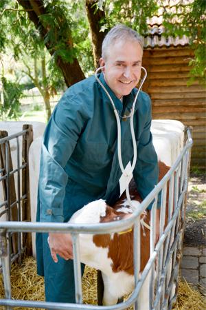 Rinder und kleine Wiederkäuer